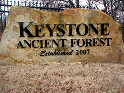 Keystone Ancient Forest